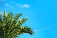 热带棕榈树 图库摄影
