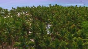 从热带棕榈森林的寄生虫的看法 影视素材
