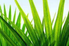 热带棕榈Leafes分支太阳轻自然 库存照片