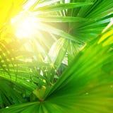 热带棕榈Leafes分支太阳轻自然 图库摄影