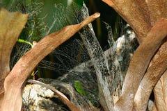 热带棕色植物背景表面  免版税库存照片