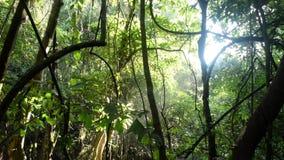 热带森林、太阳光和水切除卵巢 影视素材