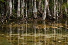热带森林反射在水中在泰国在冬天期间 免版税库存照片