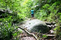 热带森林在有一个人的马来西亚背景的 库存图片