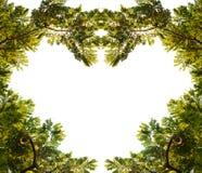 热带森林框架 免版税库存图片