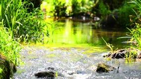 热带森林的流 影视素材