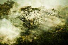 热带森林的深度有不可思议阳光通过的 免版税库存图片