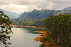 热带森林的湖 库存图片