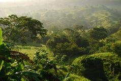 热带森林的薄雾 免版税库存照片