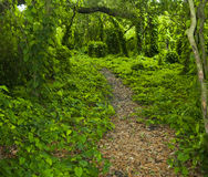 热带森林的路径 免版税库存照片