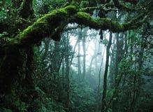 热带森林的雨 免版税库存图片