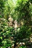 热带森林的雨 免版税库存照片