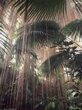 热带森林的雨 免版税图库摄影