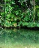 热带森林的雨 图库摄影
