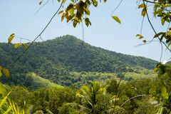 热带森林的风景在泰国 库存照片
