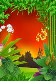 热带森林背景 免版税库存图片