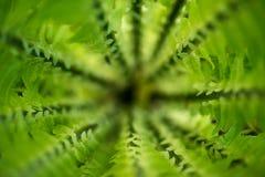 热带森林,从上面在密林,关闭的绿色蕨,背景,纹理,异乎寻常的季节性植物 免版税库存照片