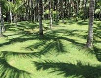 热带森林 免版税图库摄影