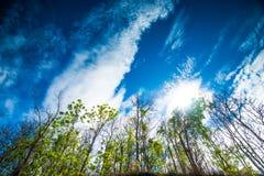 热带森林2 库存照片