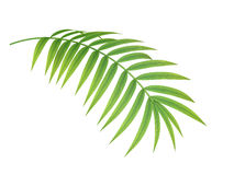 热带植物分支 库存图片