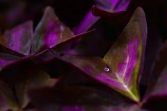 热带植物分支  库存照片