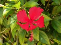 热带植物叶子 免版税库存照片