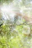 热带植物和天空照片  在减速火箭的样式葡萄酒的被定调子的照片 太阳光芒 夏天旅行的概念,无忧无虑 库存图片