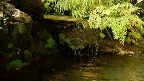 热带植物和小瀑布在美丽的庭院里 生长在与新鲜的小小瀑布附近的各种各样的绿色热带植物 影视素材