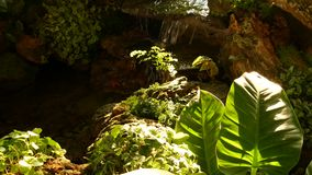 热带植物和小瀑布在美丽的庭院里 生长在与新鲜的小小瀑布附近的各种各样的绿色热带植物 股票视频
