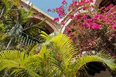 热带植物和曲拱 免版税库存照片