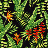 热带植物和棕榈树 皇族释放例证