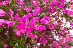 热带植物和花背景 免版税库存图片