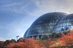 热带植物大厅 图库摄影