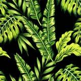 热带植物无缝的背景 免版税库存图片