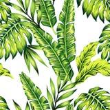 热带植物无缝的背景 向量例证