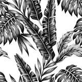 热带植物时髦无缝的背景 免版税库存图片