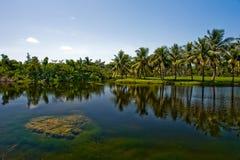 热带植物的费尔柴尔德fl的庭院 库存图片