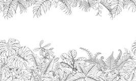 热带植物线水平的样式 库存例证