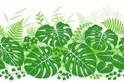 热带植物绿色样式 免版税库存照片
