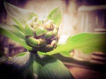 热带植物花 免版税库存图片