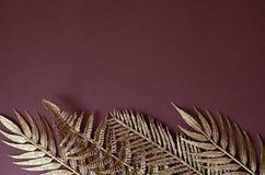 热带植物金黄分支棕色背景的 免版税图库摄影