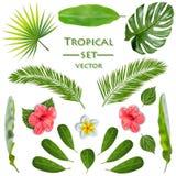 热带植物集合 向量 向量例证