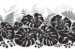 热带植物黑白照片样式 库存图片
