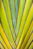 热带植物细节 免版税库存图片
