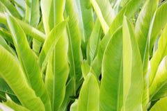 热带植物 免版税库存照片