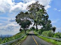 热带植被围拢的离开的山路,在途中对无处 免版税库存照片