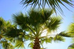热带植被在阿塔图尔克阿拉尼亚,土耳其100th周年的公园  图库摄影