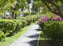 热带植被的小径海运 毛里求斯 免版税库存照片