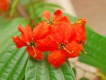 热带橙色花 免版税库存照片