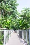 热带步行 库存图片